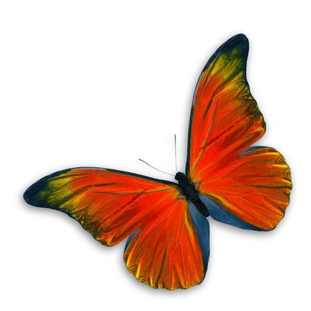 Oranje Vlinder vliegen, op een witte achtergrond