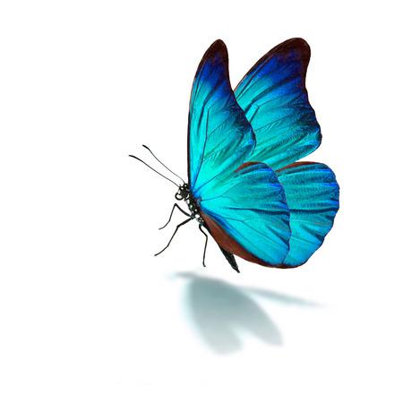 Hermosa mariposa azul sobre fondo blanco