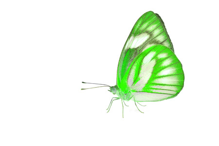 green butterfly: Beautiful green butterfly isolated on white background