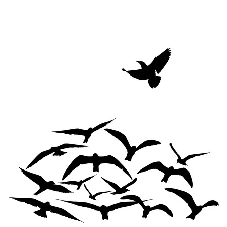 unorthodox: silhouette group of flying seagull birds with one individual bird going in the opposite direction white background. Stock Photo