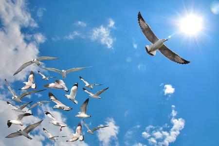 un grupo de pájaros de vuelo de la gaviota con un pájaro persona que va en la dirección opuesta con fondo de cielo azul. Foto de archivo