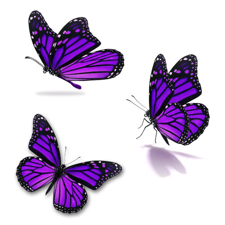 Three Colorful Butterfly, Isolated On White Background Stock Photo ...
