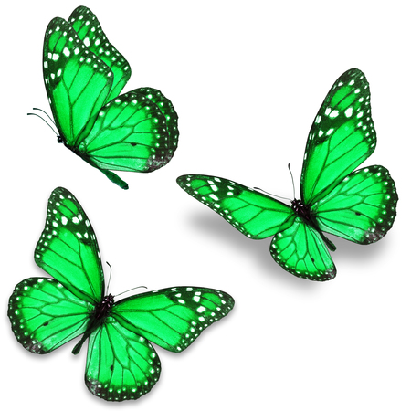 green butterfly: Three green monarch butterfly isolated on white background