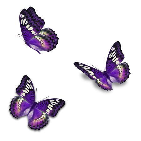 Beautiful three purple butterfly isolated on white background