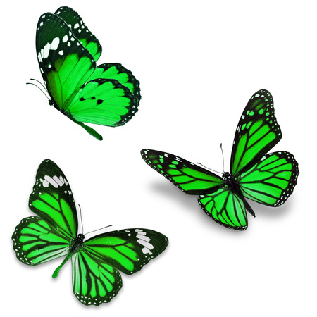 green butterfly: Three green butterfly, isolated on white background