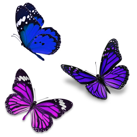 Three colorful butterfly, isolated on white background Stock Photo