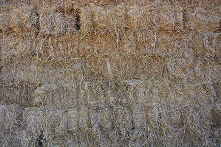 Brown Rice Straw for cow from Thailand Stock Photo