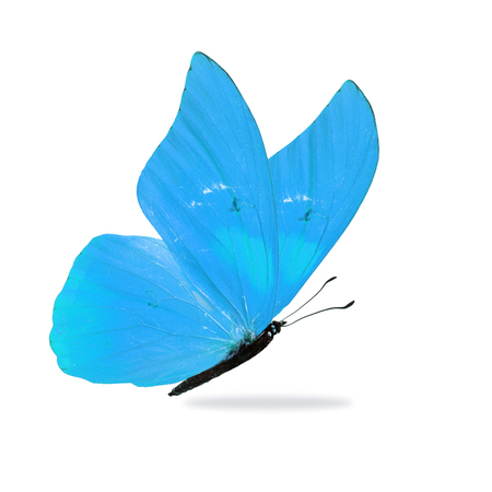 Beautiful blue butterfly isolated on white background. Stock Photo