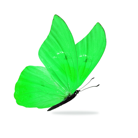 Beautiful green butterfly isolated on white background.