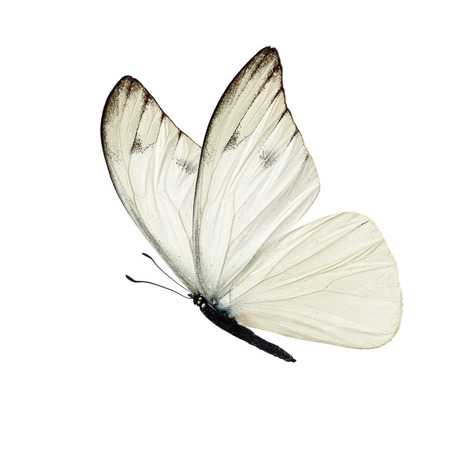 Beautiful white butterfly isolated on white background. Фото со стока