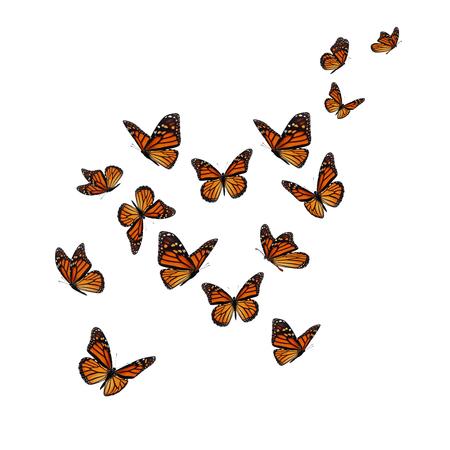 아름 다운 바둑 나비 흰색 배경에 고립입니다.