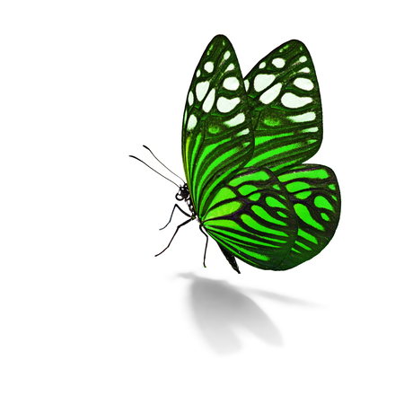 Beautiful colorful butterfly isolated on white background Stock Photo