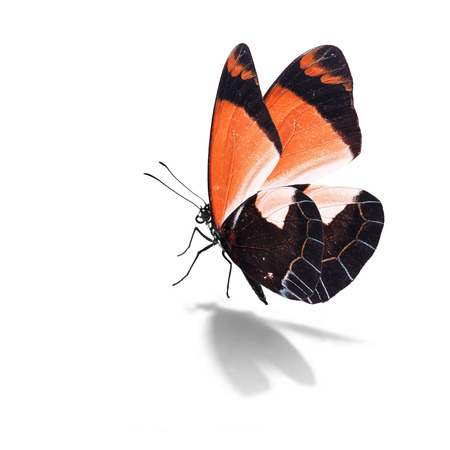 Beautiful orange butterfly isolated on white background