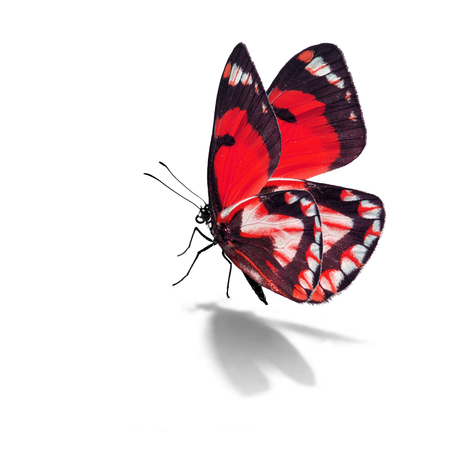 Beautiful red butterfly isolated on white background