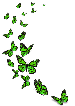 Beautiful green monarch butterfly isolated on white background.