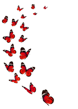 Beautiful monarch butterfly isolated on white background. Zdjęcie Seryjne
