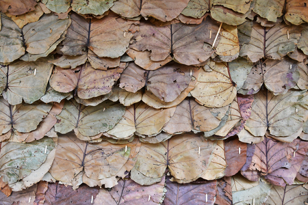 Dried leaves fence on traditional wall