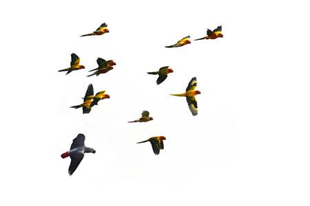 Beautiful parrot macaw bird in flight. Zdjęcie Seryjne