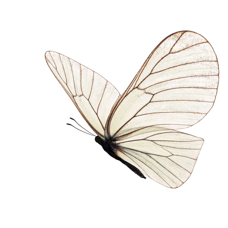 Beautiful white butterfly isolated on white background. Stock Photo