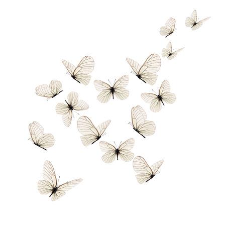 Beautiful white butterfly isolated on white background. Zdjęcie Seryjne