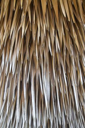 background texture from dried palm leaves. Zdjęcie Seryjne