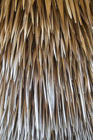 background texture from dried palm leaves. Banque d'images