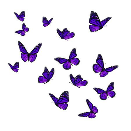 Beautiful purple monarch butterfly isolated on white background.