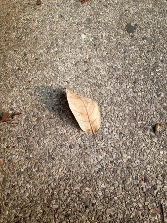 dry leaf: Dry leaf in the morning
