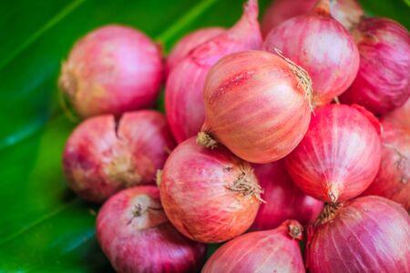 Red onions in green leaf Reklamní fotografie