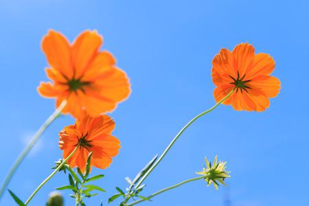 Gelbe Blume und blauer Himmel