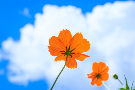 Yellow  flower and blue sky photo