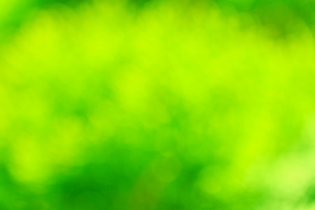green nature: abstract green nature background Stock Photo