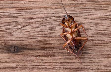 Dead cockroaches on wooden table Archivio Fotografico