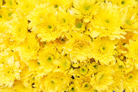 white flowers: Yellow flower background Stock Photo