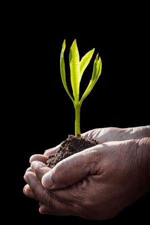 plant growth: Old human hand holding plant on black background Stock Photo