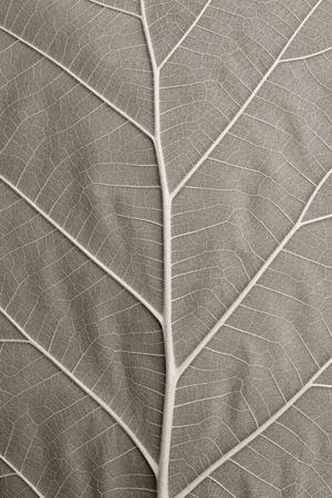 Blatt Textur Standard-Bild - 43650340