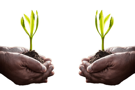 plant hand: Old human hand holding plant on white background mean ages is can not stop you to learn or do something. Stock Photo