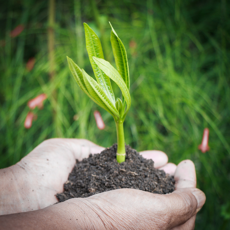 hands holding plant: Old female hands holding plant. new life Stock Photo