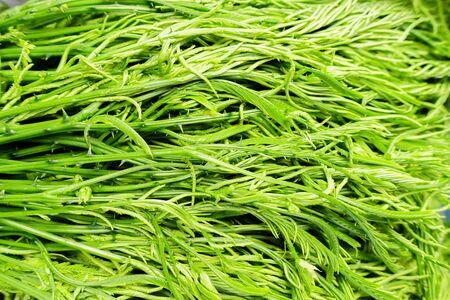 cha om: Acacia pennata