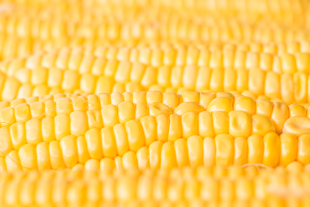 maiz: Fresh sweet corn on wooden table