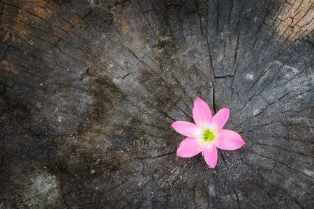 life change: Flower growth up on dead tree as business concept can be successful