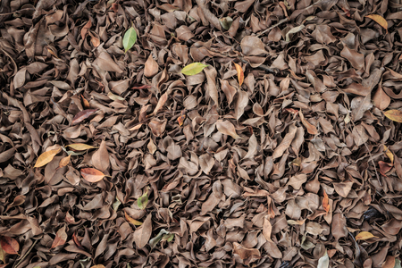 dode bladeren: Dead leaves for background or texture