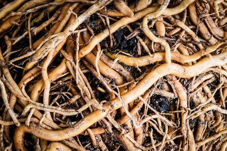 herbage: Herbage textures Stock Photo