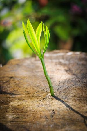 dode bladeren: Nieuwe boomgroei op dode boom als business concept kan succes