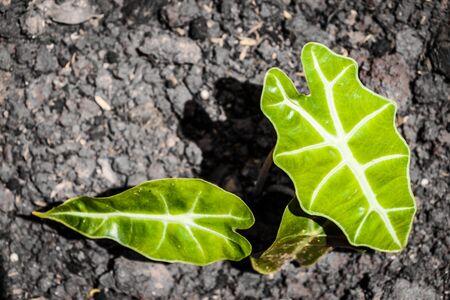pflanze wachstum: A plant growth on soil