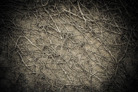 creeping plant: creeping plant on grunge wall background