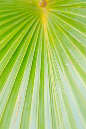 abstrakt gr�n: abstract green background Lizenzfreie Bilder
