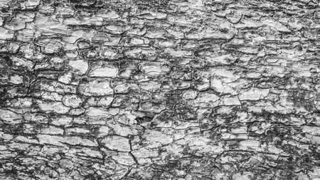 bark background texture: Bark background texture