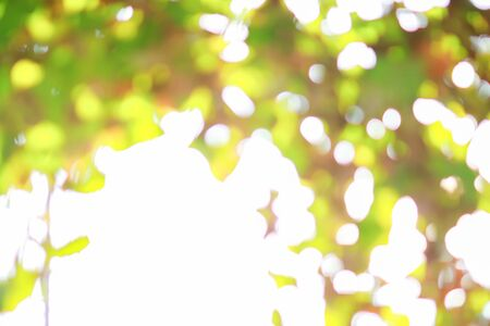 focus on background: abstract, backdrop, background, blur, blurred, bokeh, bright, color, colorful, day, effect, focus, foliage, forest, garden, grass, green, leaf, light, lush, natural, nature, pattern, plant, season, shiny, soft, spring, summer, sun, sunlight, sunny, textur