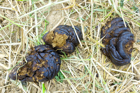 droppings: cow dung close-up